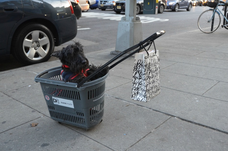 HOW MUCH IS THAT DOGGIE