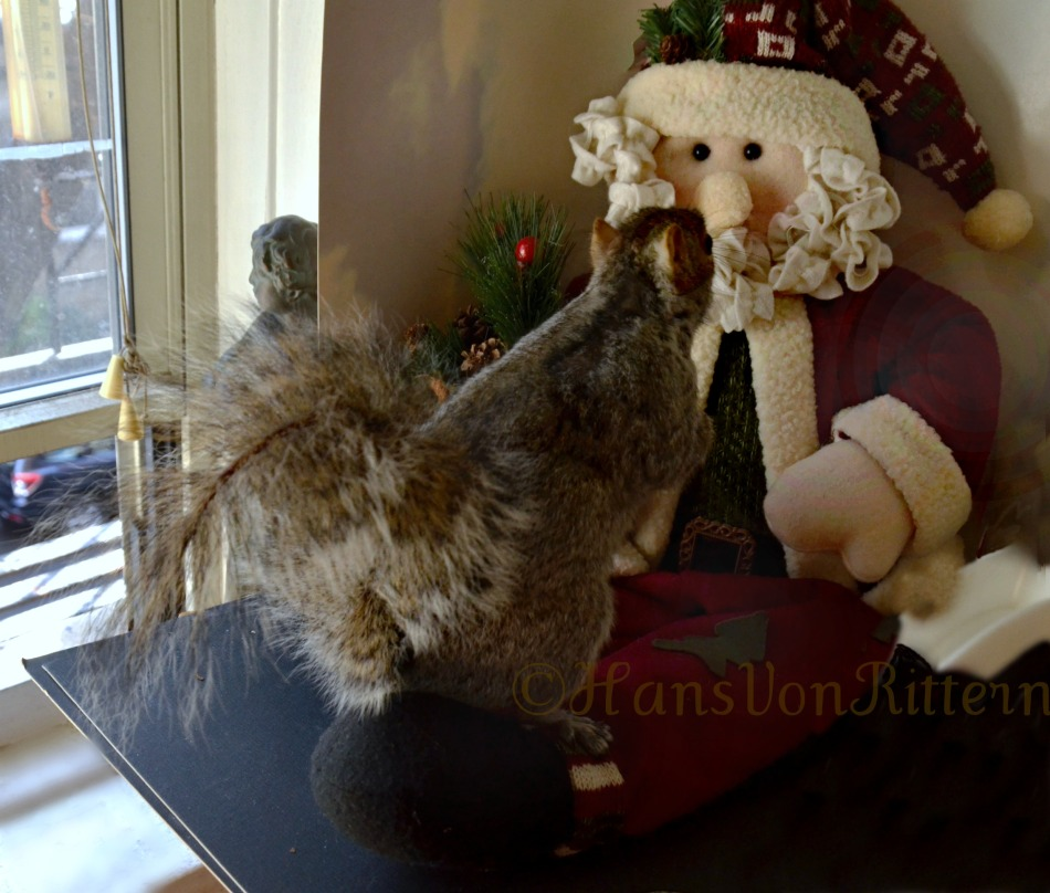 SQUIRREL MEETS SANTA CLAUS