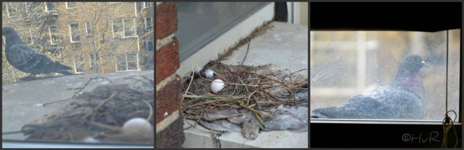 PIGEON NEST collage