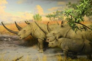 Rhinoceros family in the graslands of Africa exhibit