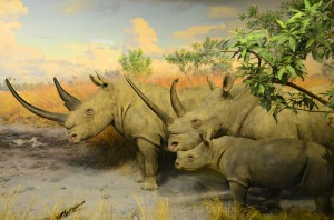 Rhinoceros family in the graslands of Africa exhibit