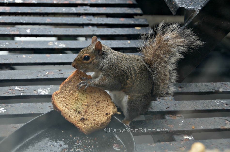 OSCAR THE SQUIRREL AND TOAST